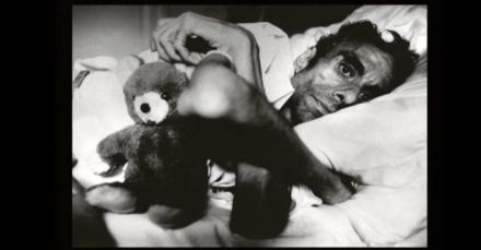 Teddy Bear Project Varda Herdeles